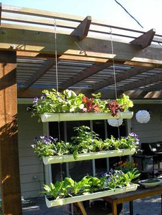 A free hanging gutter vertical garden. As a curtain between grill area and sitting area, will also shade the area!
