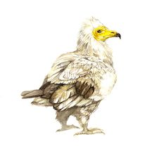 Animals- science illustration on Behance