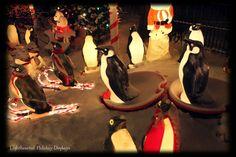 Penguins on a ski slope.  hahaha
