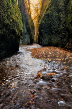 Oneonta Gorge, Columbia River Gorge, Oregon, US (by Howard Snyder)