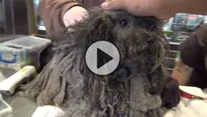 His Owners Moved & Left Him Behind. You Won't Believe The Transformation After His Rescue!
