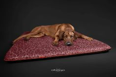 Handmade with passion! Your Dog, Mattress, Passion, Nice, Interior, Dogs, Pattern, Flowers, Handmade
