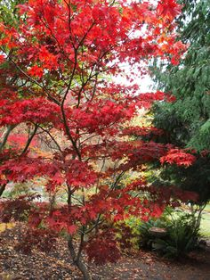 """View Plant 