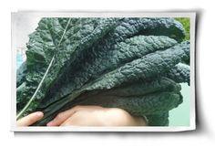 EM & Bokashi – Veganic Probiotics for Insect Control & Healthy Soil #veganic #gardening