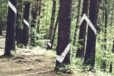 Bosque Oma_9