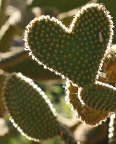 Hearts Everywhere: Hearts in Nature
