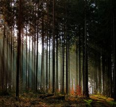 forest magical forest