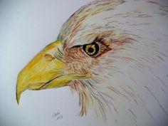 Color Pencil  Print  $35.00 + s.h.
