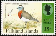 Rufous-chested Plover stamps - mainly images - gallery format Postage Stamp Collection, British Overseas Territories, Going Postal, Wild Creatures, Shorebirds, British Colonial, Fauna, Stamp Collecting, Postage Stamps