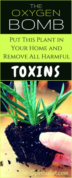 Remove toxins from your home!
