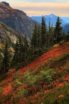 """Sahale Arm"""" by Inge Johnsson: View from the Sahale Arm in North Cascades National Park, with blueberry bushes in fall color"""