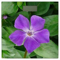 Vinca Major Bathroom Scale by www.zazzle.com/htgraphicdesigner* #zazzle #gift #giftidea #scale #purple #bathroom #vinca #major #summer #flower #spring