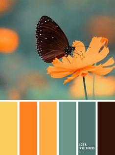 Yellow, orange , sage green color scheme , color palette Source by marilenamatala color schemes Scheme Color, Warm Color Schemes, House Color Schemes, Warm Colors, Color Combinations, Orange Color Schemes, Orange Color Palettes, Color Schemes Colour Palettes, Green Colour Palette