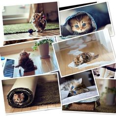 Windows 8 Theme Super Cute Kittens, Kittens Cutest, Get Paid Online, All Mobile Phones, Most Beautiful Wallpaper, Great Backgrounds, Windows 8, Wordpress Plugins, Wood Watch