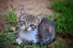 Cat photo by Valerian Manea on 500px