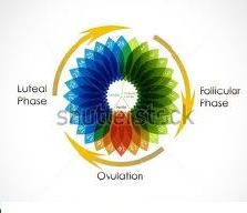 Ovulation is a process in which a mature ovarian follicle releases an egg.
