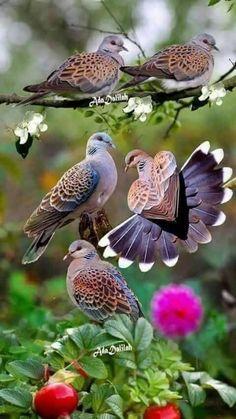 Cute Bird Houses Pictures 38 Ideas For 2019 Cute Birds, Pretty Birds, Beautiful Birds, Animals Beautiful, Beautiful Soul, Exotic Birds, Colorful Birds, Tier Fotos, Bird Drawings