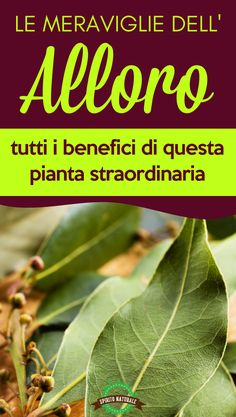 #alloro #piante #spiritonaturale Home Remedies, Natural Remedies, Veggie Patch, Nutrition Information, Medicinal Plants, Natural Medicine, Superfood, Natural Health, Health And Wellness