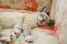 how to remove cat urine odor from leather