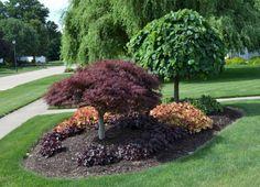 40 Stunning Evergreen Landscape Ideas For Front Yard Garden Inexpensive Backyard Ideas, Cheap Landscaping Ideas, Backyard Ideas For Small Yards, Home Landscaping, Landscaping With Rocks, Front Yard Landscaping, Burm Landscaping, Landscaping Images, Large Backyard