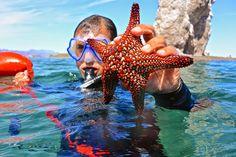 #marinelife #UnCruiseAdventures