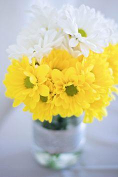 white and yellow sunflowers