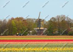 Tulip Field & Windmill Keukenhof Gardens Lisse Holland Netherlands Tractor Bridge Dutch Countryside Fine Art Photography Wall Photo Print by JWPhoto on Etsy