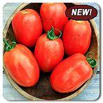 Organic Granadero F1 Hybrid Tomato