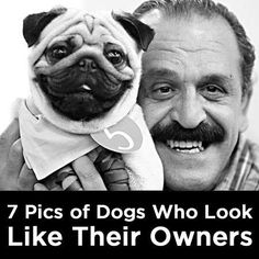 Owners&dogs