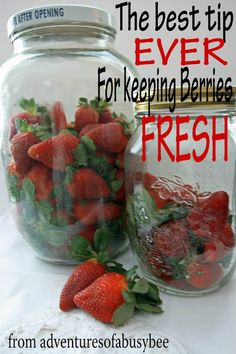 Adventures of a BusyBee: Keeping Berries Fresh!!