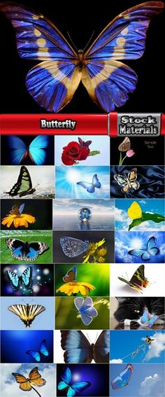 Download Butterfly macro conceptual illustration nature plant flower 25 HQ Jpeg Free