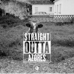 https://flic.kr/p/xgkCeL | StraightOuttaAzores | Like everyone else, I've been seeing the Straight Outta meme all over the Internet. Well, I found the generator for it and mixed it with a picture of a bull in a yard in the Azores (Portuguese islands in the Atlantic Ocean) that I took when I was there years ago.