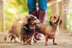 """""""How do you get your hair to look so good?"""" Hot Dog! Pet Photography 