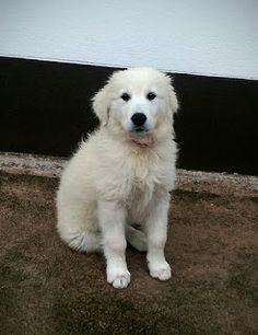 Welcome Kerry!: Settling in! Big Dogs, Dogs And Puppies, Types Of Food, Blog, Large Dogs, Blogging