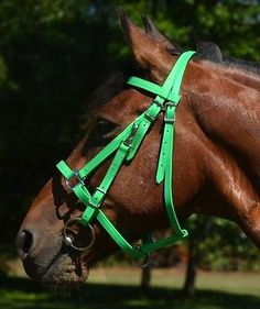 LIME-GREEN-HALTER-BRIDLE-COMBO-HEADSTALL-Trail-Endurance-Beta-Biothane-ANY-SIZE