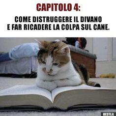 hahaha I already found it strange 😍😍😍 … - Katzenrassen Beautiful Cats Funny Animal Pictures, Funny Images, Funny Animals, Cool Pictures, Cute Animals, I Love Cats, Crazy Cats, Cool Cats, Humor Facebook