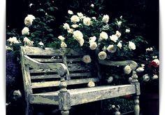 wonderful garden spot