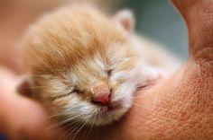 Guía para cuidar gatos recién nacidos con o sin madre