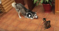 Dogs Annoying Cats With Friendship►►http://lovable-cats.com/dogs-annoying-cats-with-friendship/?i=p