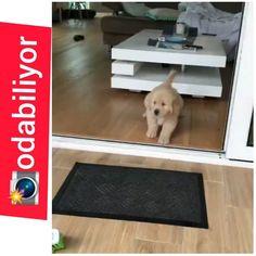 😍 #goldenretriever 🐶 🥰 🐶 🐕 🐩 🐱 🐃 🦁 🐯 🐽 🐥 🐧 🦌 🦋 🦂 🐜 🐈 🐕 🐩 🐱 🐃 🦁 🐯 🐽 🐥 🐧 🦌 🦋 🦂 🐜 😍🐈🐱🐈😍 🐶 🐕 🐩 🐱 🐃 🦁 🐯 🐽 🐥 🐧 🦌 #terrier #dog #köpeksevgisi… Bath Mat, Terrier, Kids Rugs, Dog, Home Decor, Diy Dog, Decoration Home, Kid Friendly Rugs, Room Decor