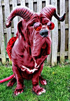 Embedded image permalink Best Dog Costumes, Pet Halloween Costumes, Pet Costumes, Dog Halloween, Funny Dogs, Funny Animals, Cute Animals, Bulldog Costume, Funny Dog Pictures