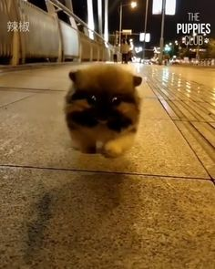 Awww lawd he comin Baby Animals Pictures, Cute Animal Pictures, Animals And Pets, Cute Little Animals, Cute Funny Animals, Cute Cats, Cute Dogs And Puppies, Baby Dogs, Funny Animal Memes