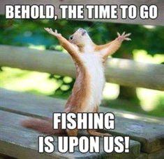 """squirrel meme with pic of squirrel singing Whitney Houston's """"I Will Always Love You"""" Laugh Out Loud With These Funny Squirrel Memes - World's largest collection of cat memes and other animals Love You Funny, Cute I Love You, Love You Meme, Squirrel Memes, Cat Memes, Funny Memes, Hilarious, Fishing Quotes, Fishing Humor"""