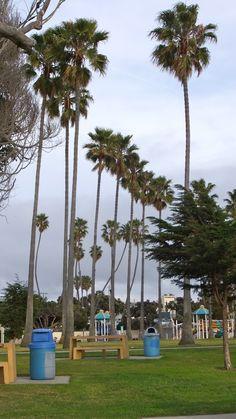 Veteran's Park Redondo Beach, California ~~ spent many hours at this beautiful park :)