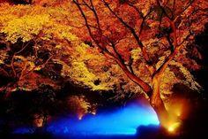 六義園の紅葉ライトアップがロマンティックすぎる! | hinata
