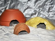 Various hides that are suitable for a Hognose Snake | thehognosesnake.co.uk