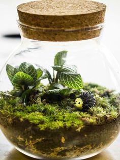 Closed terrarium - how to create a self sustaining terrarium.