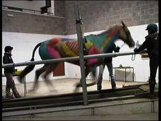 Hartpury College 2009 - ESMA - Treadmill Gallop