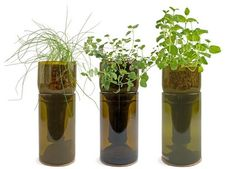 –Recycled wine bottles as pots for hydroponic grown herbs.