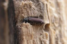 Woodworm treatment and control London - commercial and residential